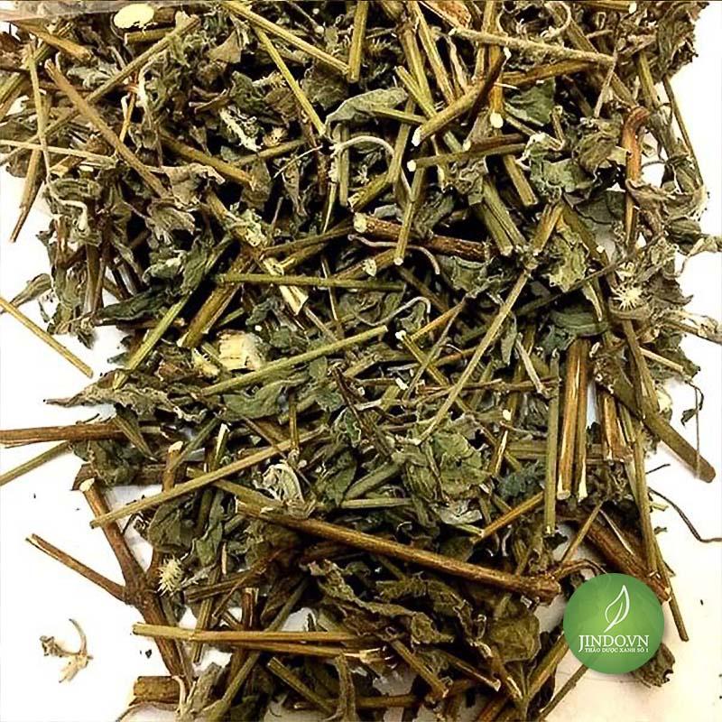 Công dụng tuyệt vời của cỏ xước - thảo dược xanh số 1 Jindo.vn