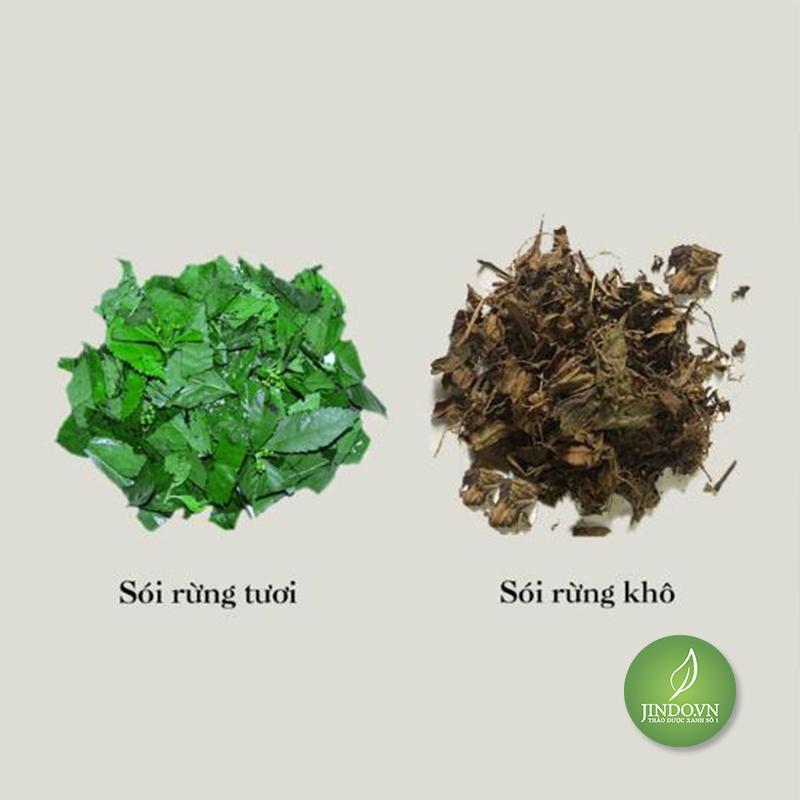 cay-soi-rung-ho-tro-dieu-tri-ung-thu-dau-nhuc-xuong-khop-thao-duoc-xanh-so-1-jindo.vn-1-8