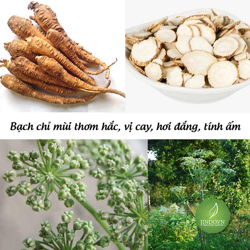 bach-chi-dieu-tri-hoi-mieng-dai-tien-ra-mau-thao-duoc-xanh-so-1-jindo.vn-5