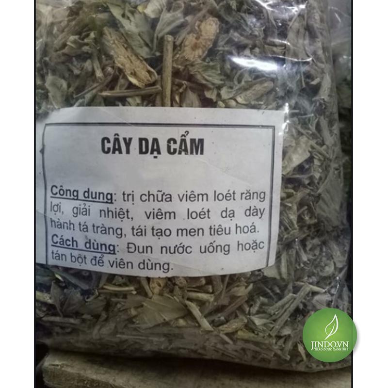 cay-da-cam-tac-dung-chua-benh-da-day-hieu-qua-thao-duoc-xanh-so-1-jindo.vn-6