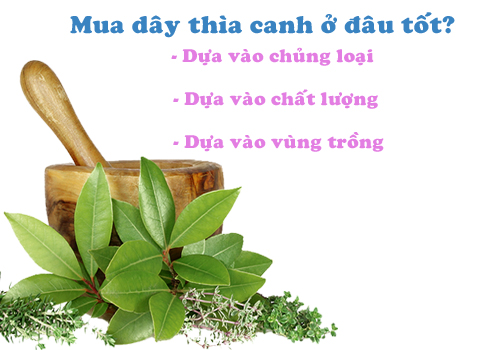 wp-content/uploads/2018/11/day-thia-canh-rung-thao-duoc-xanh-so-1-jindo.vn-jd002-3.jpg