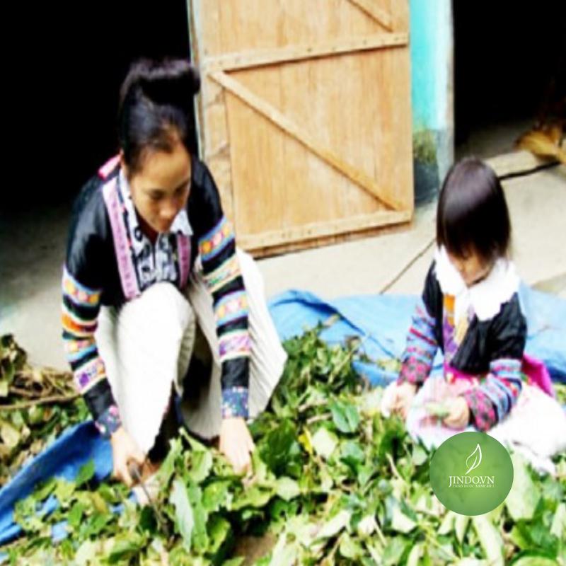 la-tam-nguoi-dao-do-danh-cho-phu-nu-sau-sinh-jindo.vn-thao-duoc-xanh-so-1-4