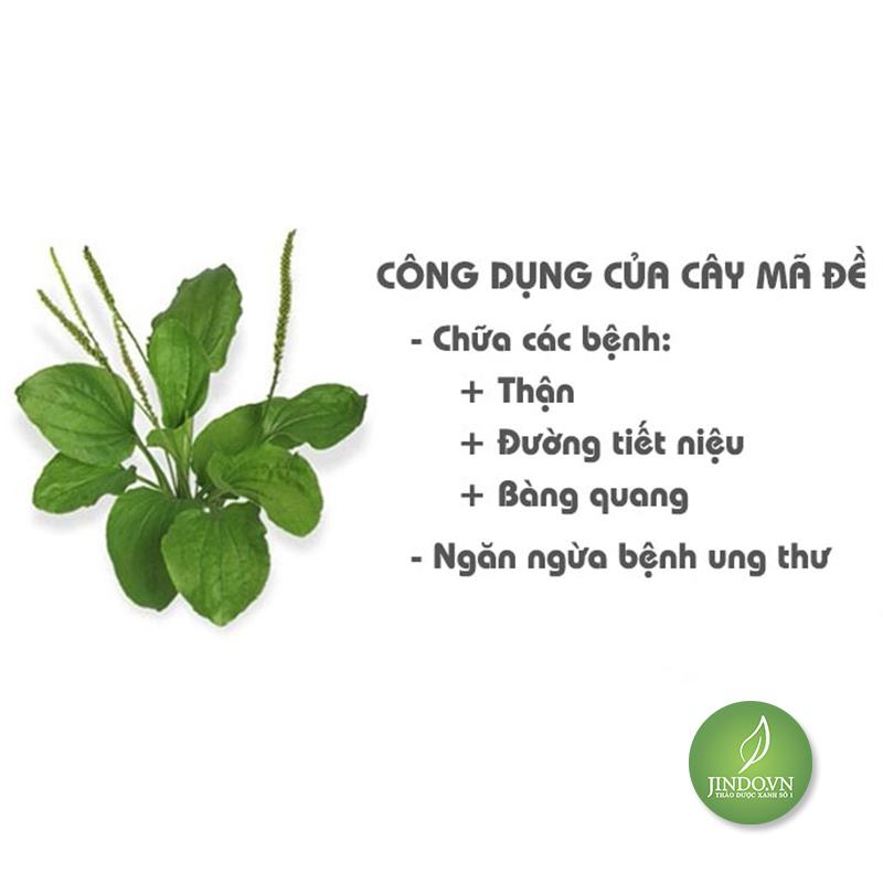 cay-ma-de-chua-benh-than-va-duong-tiet-lieu-thao-duoc-xanh-so-1-jindo.vn-1-3