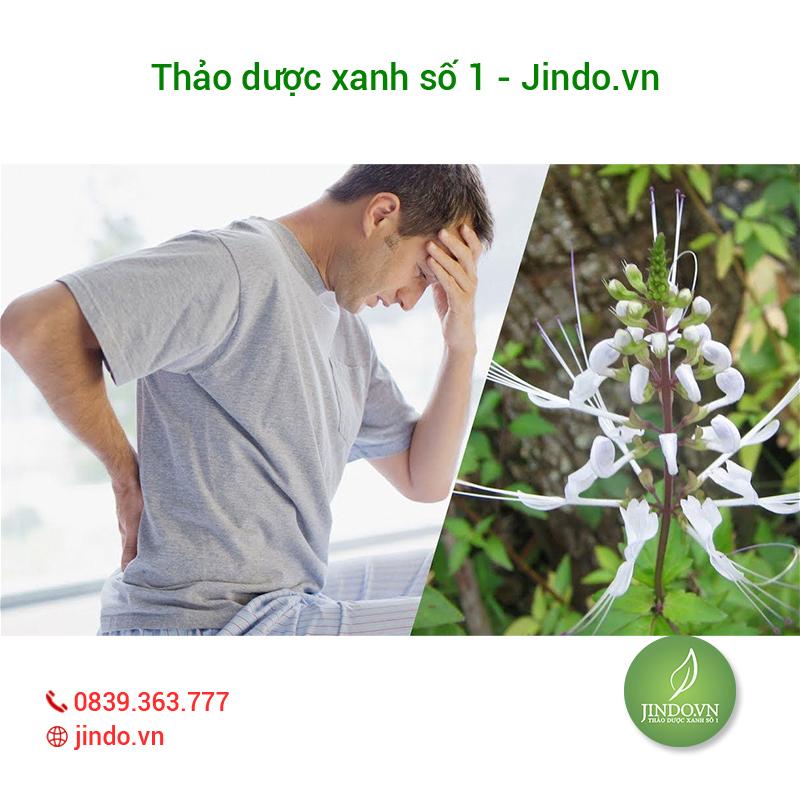 cay-rau-meo-dieu-tri-soi-than-hieu-qua-thao-duoc-xanh-so-1-jindo.vn-1-2