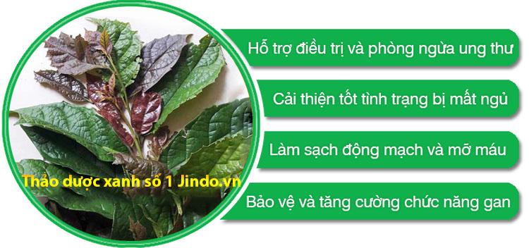 tac-dung-cua-cay-xa-den-ho-tro-dieu-tri-ung-thu-thao-duoc-xanh-so-1-jindo.vn
