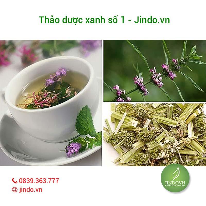 ich-mau-vi-thuoc-quy-dieu-tri-roi-loan-kinh-nguyet-thao-duoc-xanh-so-1-jindo.vn-1-3
